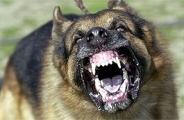 [Image: mean-dog-260x170.jpg]