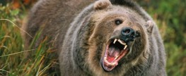 PETA Rejoices: Bear Spray Works, Bear Uninjured, Hunter Gets Mauled (Graphic Image)